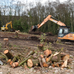 Construction - Clearing of Trees