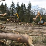 Construction - Woodland Clearing